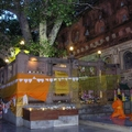 Bodhi Tree in Bodhgaya, India