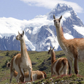 Image Patagonia - Best destinations for thrill seekers