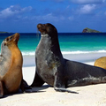 Image Galapagos Islands - The most spectacular places in America