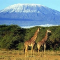 Image Kilimanjaro - The most spectacular places in Africa