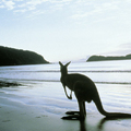 Image Kangaroo Island, Australia - The best places to watch wildlife