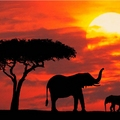 Image Kenya - Best destinations for thrill seekers