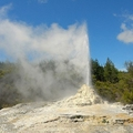 Lady Knox Geyser, New Zealand