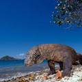 The Komodo Island