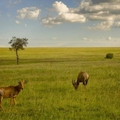 Image Masai Mara National Reserve, Kenya - The Best Places for a Safari in Africa