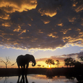 Image  Chobe National Park, Botswana - The Best Places for a Safari in Africa