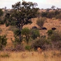 Image Kruger National Park, South Africa - The Best Places for a Safari in Africa
