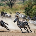 Image Serengeti National Park, Tanzania - The Best Places for a Safari in Africa