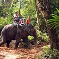 Image Elephant trekking - The Best Places to Visit in Phuket, Thailand