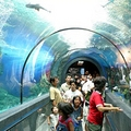 Image  Phuket Aquarium - The Best Places to Visit in Phuket, Thailand