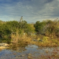 Image Everglades National Park  - The Best Places to Visit in Florida, U.S.A.