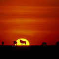 Image Serengeti, Tanzania - The best places to watch sunset
